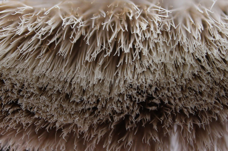 Abstract Abstract Photography Animal Themes Background Backgrounds Bristles Brush Close Close Up Close-up Day Domestic Animals Full Frame Indoors  Mammal Maximum Closeness Nature No People Up Close Winter