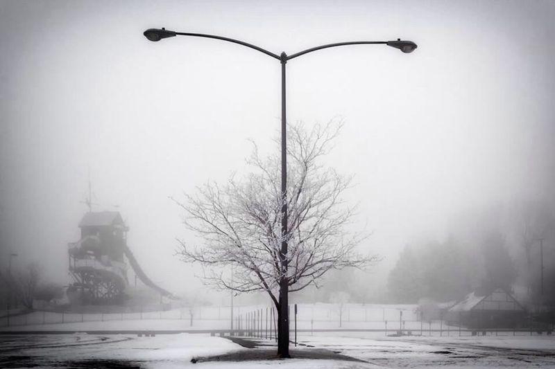 Fog Tree Light Post