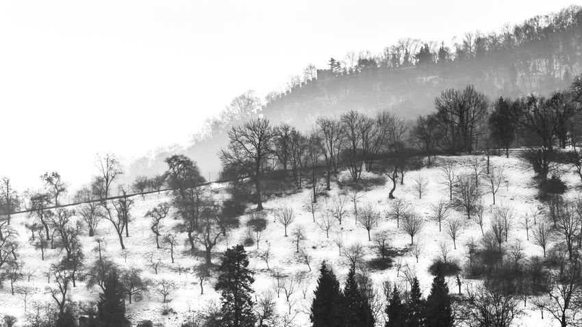 Snow and trees Beauty In Nature Black And White Branch Clear Sky Contrast Countryside Czech Republic Day Growth Hillside Landscape Mist Misty Nature No People Outdoors Prague Scenics Sky Snow Tranquil Scene Tranquility Tree Winter