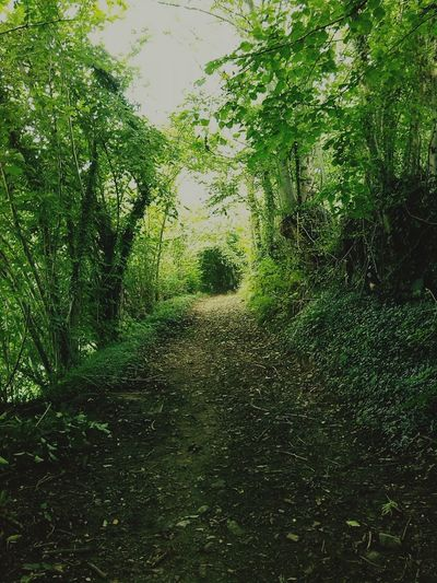 Finding New Frontiers Fairy World Into The Woods Into The Wild Nature Power Green The Secret Spaces