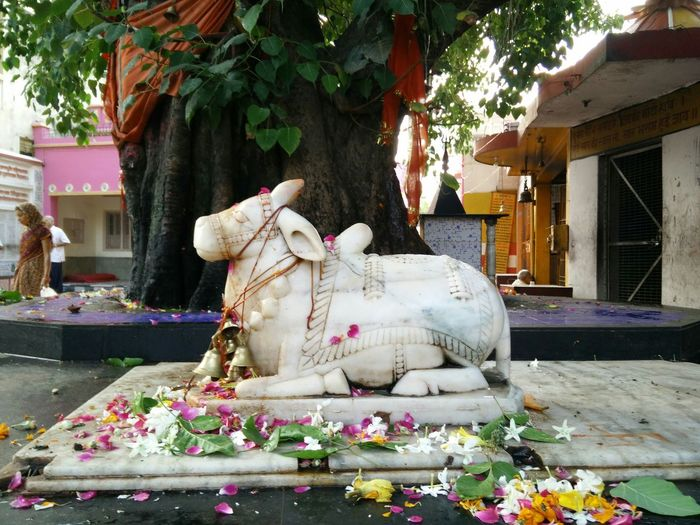 Altars The Nandi Bull ! Shiva Temple Marble Statue