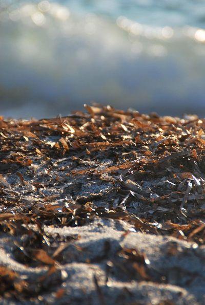 Sardinia Beach Seaweed Closeup