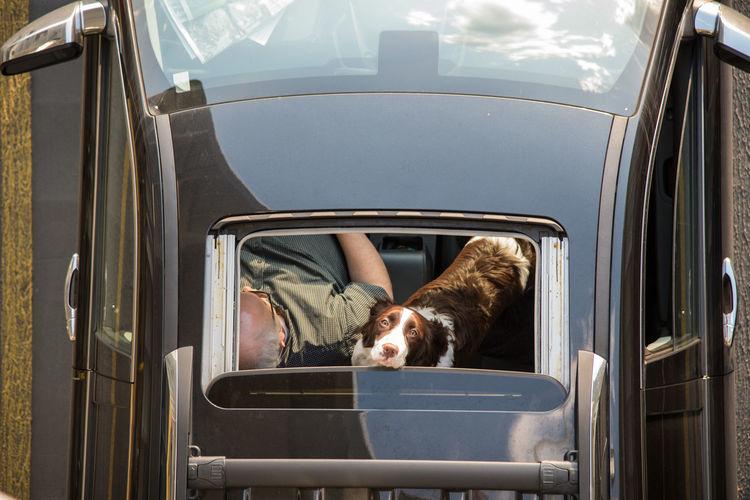 Adults Only Aerial Animal Themes Aussie Cars Cute Day Dogs Drone  Flying Indoors  Longing Mammal One Person Overhead People Pets Sunroof Window