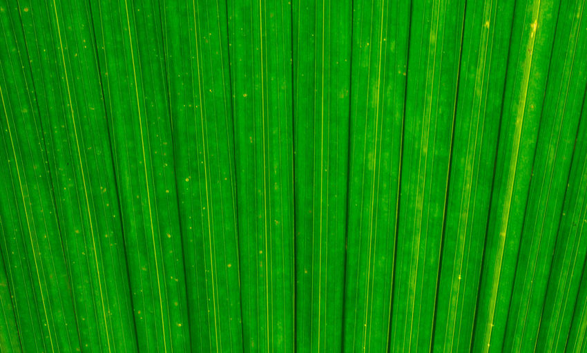 macro texture of green leaf for background Beautiful Bright Freshness Life Lines Abstract Backgrounds Close-up Concept Green Color Leaf Macro Nature Organic Outdoors Pattern Plant Plant Part Textured  Wallpaper