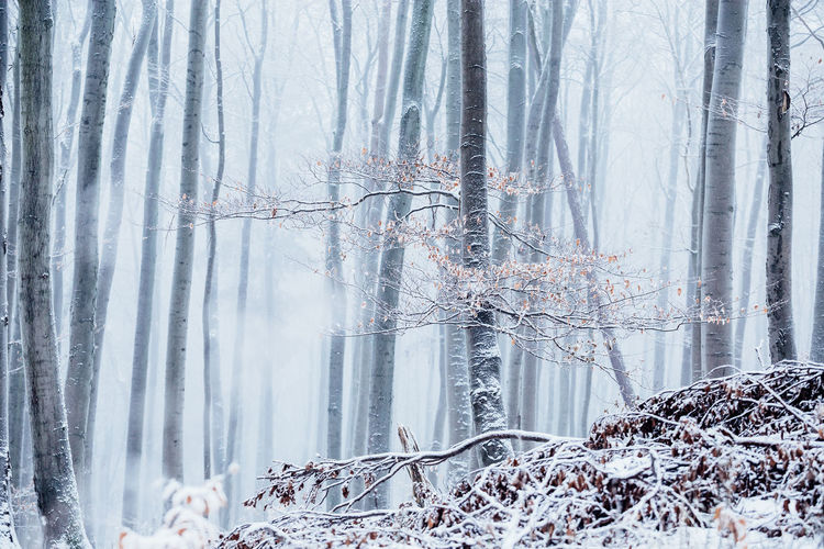 Plants and trees in forest during winter