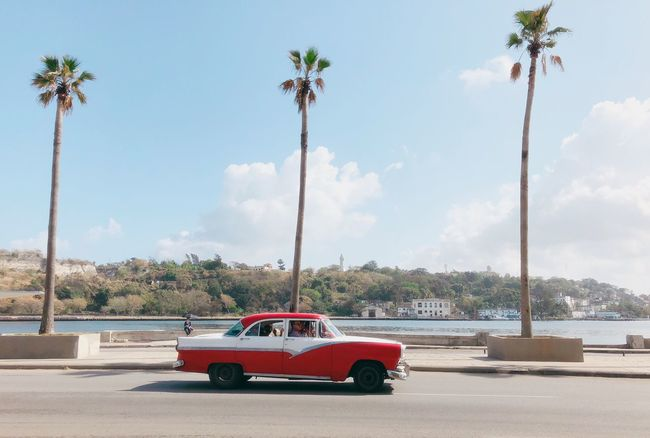 Classic car cruising the Malecón Cuba Havana Classic Car Tree Car Transportation Land Vehicle Day Mode Of Transport Outdoors Red Cloud - Sky Palm Tree