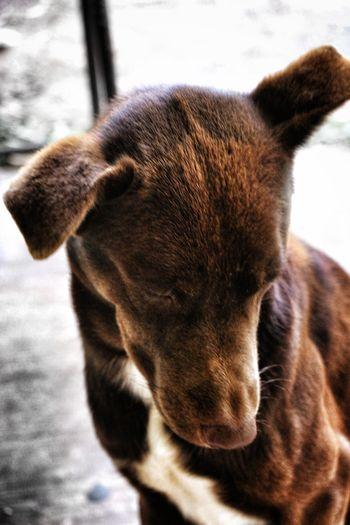 Bend Down EyeEm Best Shots EyeEmNewHere Eye4photography  Pets Dog Close-up Animal Tongue Pit Bull Terrier Animal Leg Animal Limb Animal Nose Snout