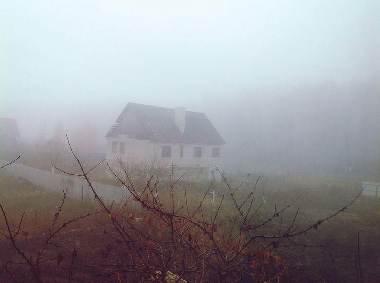 туман утро Fog Forrest