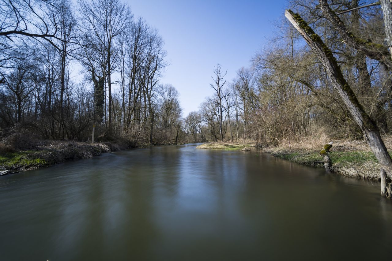 tree, bare tree, water, nature, river, tranquility, tranquil scene, beauty in nature, scenics, no people, day, outdoors, landscape, branch, forest, clear sky, sky