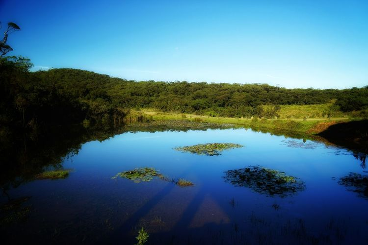 Water Plant Tree Tranquil Scene Tranquility Blue Sky Scenics - Nature Beauty In Nature Nature Reflection No People Lake Day Non-urban Scene Growth Forest Green Color Clear Sky Outdoors