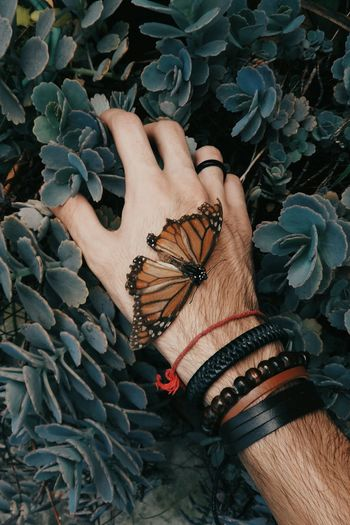 Butterfly Insect Nature Hand