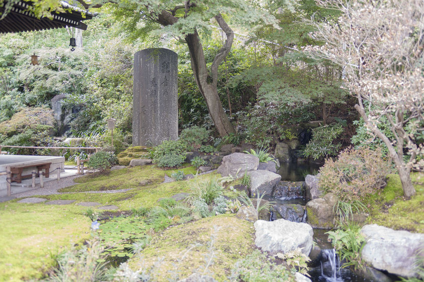 Japanese Garden Temple Of Japan Architecture Beauty In Nature Built Structure Day Environment Flowing Water Forest Growth Land Nature No People Outdoors Plant Rock Rock - Object Solid Tranquil Scene Tranquility Tree Water α900