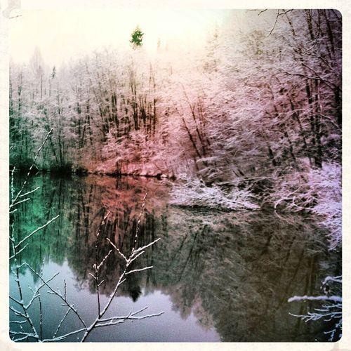 Лес красота зима холодно