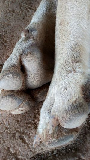 Low Section High Angle View Close-up Toe Domestic Cat Human Foot Animal Leg Foot Domestic Animals Dog Rough Paw