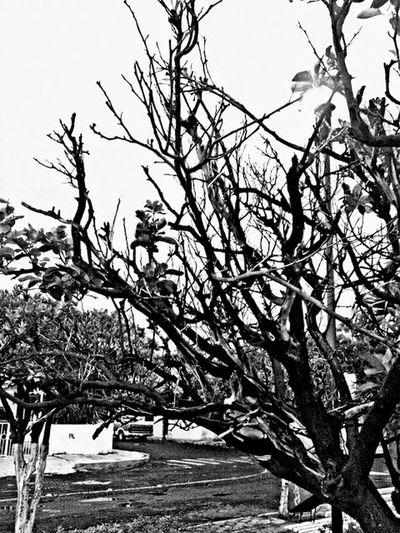 Ramas 7 Tree Branch Snow Bird Bare Tree Cold Temperature Winter Sky Single Tree Tranquil Scene