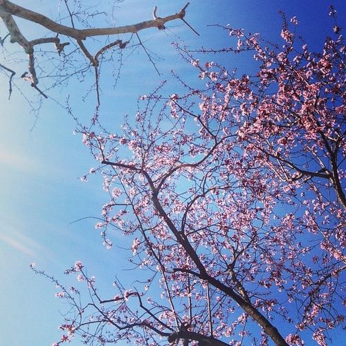 Marzo primaveral. Todo se renueva. Equilibrio pleno. Preparados para el cambio y renovación. Toda esa energía para con nosotros. Agradecer por la fuerza y vitalidad que tenemos ante situaciones difíciles en la vida que son superables. The Spring Is Coming
