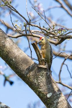 Pajaro carpintero Animal Animal Themes Animal Wildlife Bird No People One Animal Sky Tree