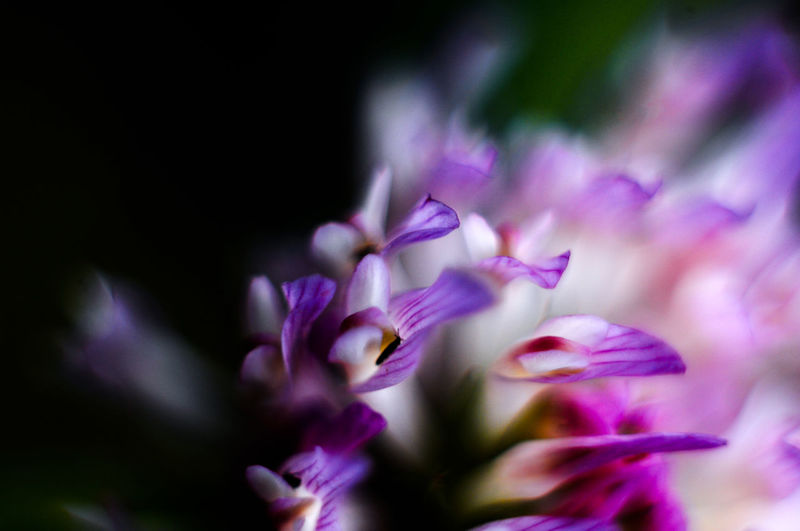 Beauty In Nature Blooming Close-up Flower Flower Head Freshness Selective Focus Softness