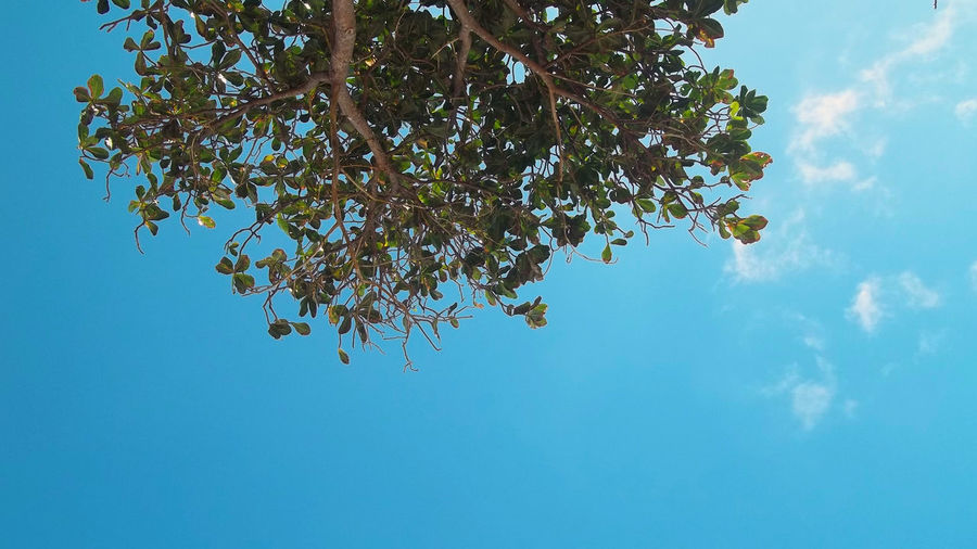 Leafs on The Blue Sky Beach Photography Beautiful Blue Sea Beach Beachphotography Beauty In Nature Beauty In Nature Blue Blue Sky Bluesky Branch Clear Sky Close-up Flower Freshness Fruit Growth Low Angle View Nature Outdoors Rijall Rijall Blues Rijallblues Sky Tree