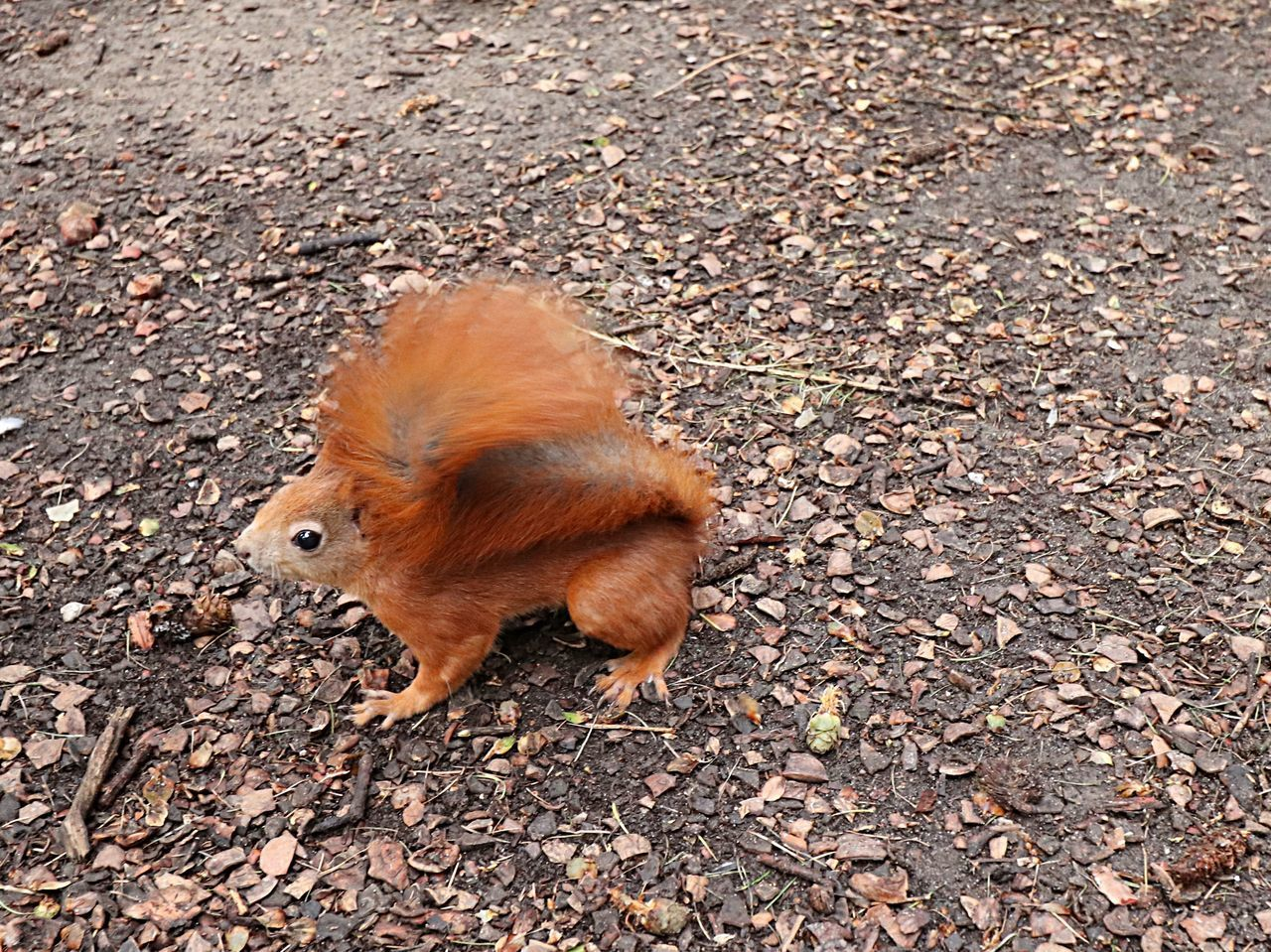 HIGH ANGLE VIEW OF A DOG ON FIELD