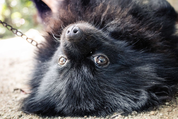 A puppy life