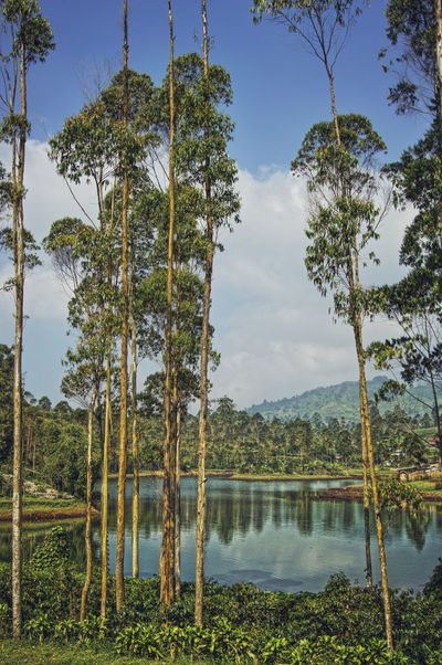Bandung Beautiful Cileunca Danau Destination Lake Mount Mountain Nature Pengalengan Photography Pohon Resort River Situ Sungai Tourism Travel Tree Water