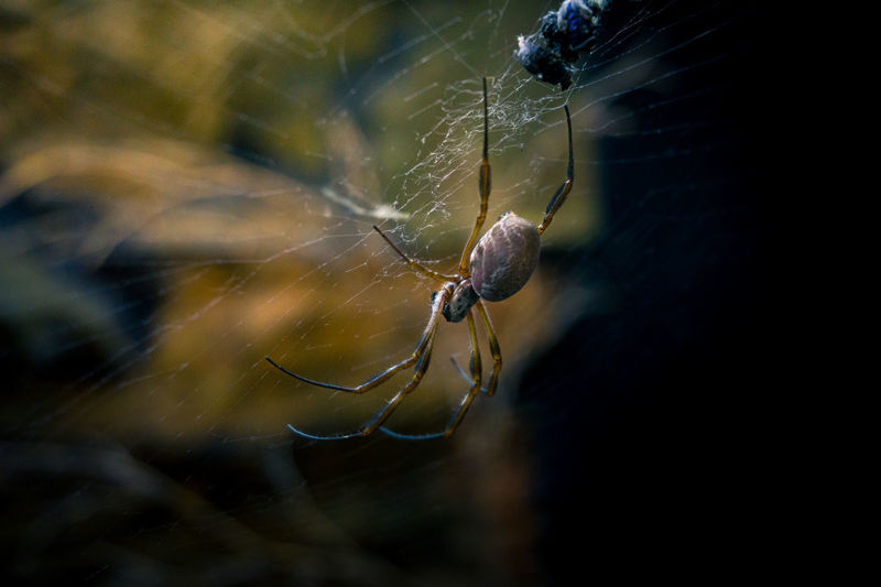 Close-up of a spider Arachnida Araneae Background Fear Halloween Insects  Morning Light Net Scary Spider EyeEm Nature Lover EyeEm Best Shots - Nature Exceptional Photographs Animals Eight Legs Spider Web Spiders Climbing Spiderweb Web Tarantula