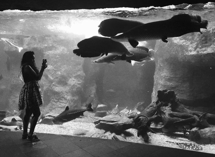 Making friends Urban Lifestyle IPhoneography Blackandwhite Photography Zoo Dallas World Aquarium Streetphotography Enjoying Life Getting Inspired Check This Out Shades Of Grey