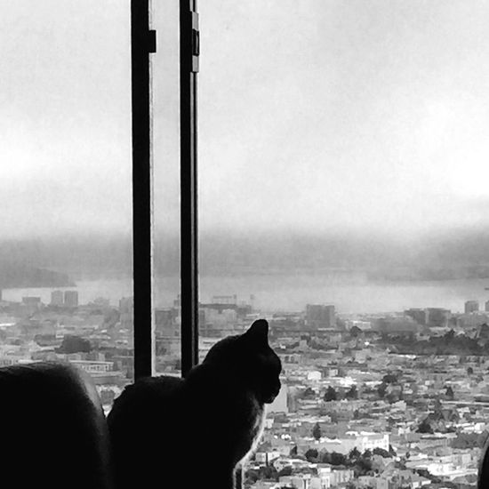 Winston looking out the window! San Francisco Bay