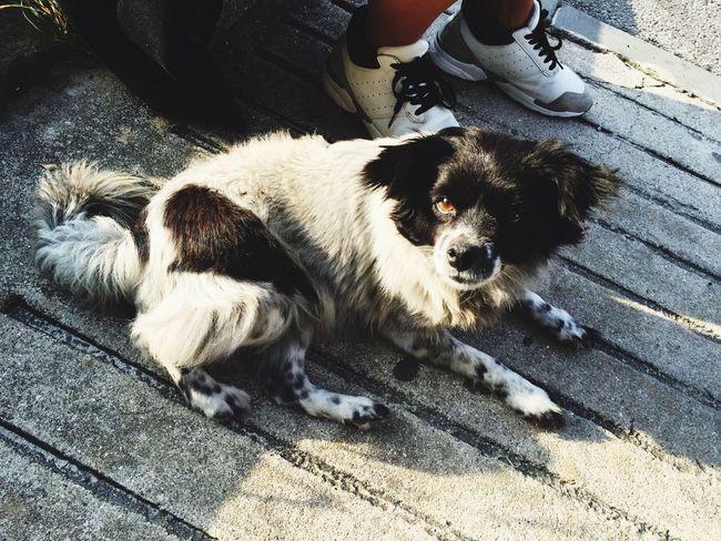 제주도 에서 만난 아이 JEJU ISLAND  Dog