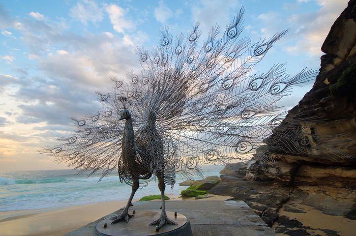 Art Beach Walking Australia Enjoying Life
