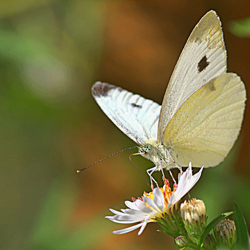 Animal Themes Animals In The Wild Butterfly Flower Garden Photography Insect Macro Nature Outdoors Wildlife