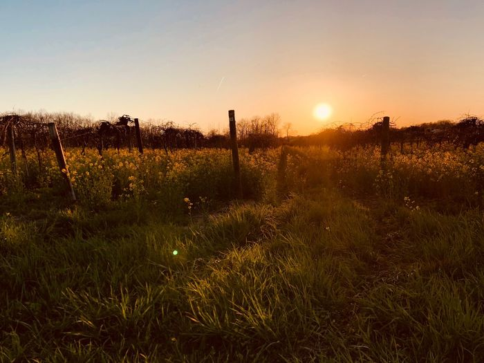 Country life EyeEm Selects Sky Sunset Field Sun Beauty In Nature Nature Grass Plant Sunlight Lens Flare Land Growth Tranquility Environment Sunbeam Scenics - Nature No People Orange Color Landscape