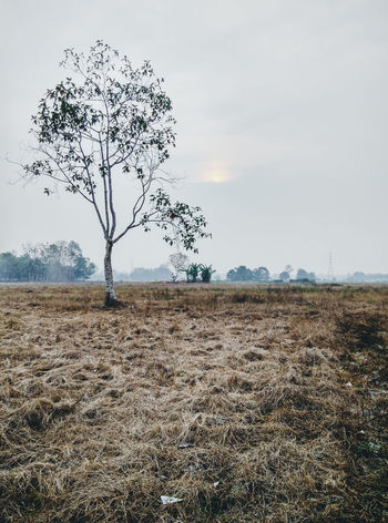 long and bad dry season Alone Tree Bare Tree Beauty In Nature Branch Day Dry Weather Dryness El Niño Grass Landscape Nature No People Outdoors Rural Scene Sky Smog Tree Tree Weather The Great Outdoors - 2018 EyeEm Awards The Photojournalist - 2018 EyeEm Awards A New Beginning