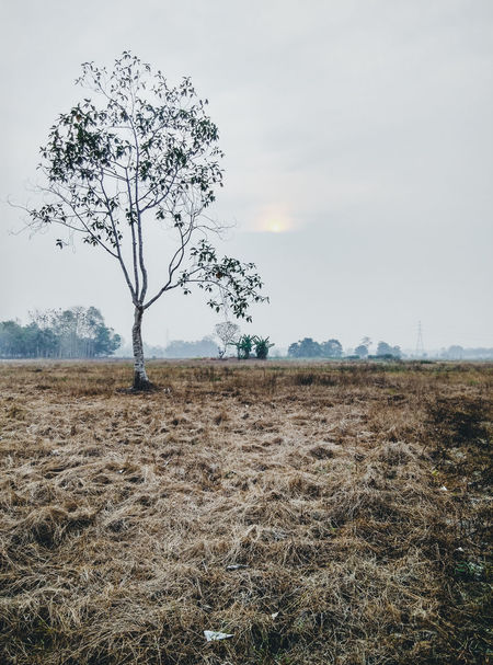 long and bad dry season Alone Tree Bare Tree Beauty In Nature Branch Day Dry Weather Dryness El Niño EyeEmNewHere Grass Landscape Miles Away Nature No People Outdoors Rural Scene Sky Smog Tree Tree Weather The Great Outdoors - 2017 EyeEm Awards The Photojournalist - 2017 EyeEm Awards