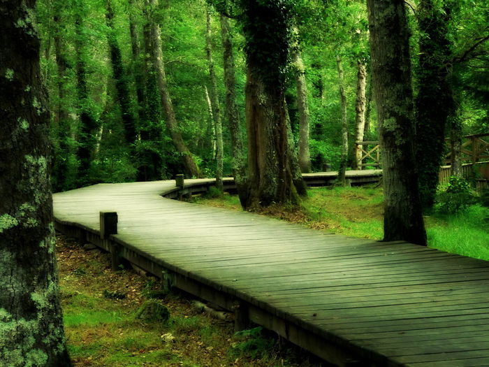Beauty In Nature Bench Boardwalk Branch Day Footpath Forest Growth Long Narrow Nature No People Non-urban Scene Outdoors Park Bench Scenics Solitude The Way Forward Tourism Tranquil Scene Tranquility Tree Tree Trunk Vacations WoodLand