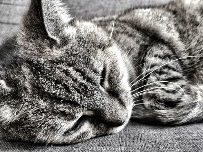 Animals Cats Blackandwhite Eye4photography  EyeEmNewHere EyeEm Best Shots Closeup Justgoshoot Sleeping Cat Resting Photography Pets Close-up Animal Themes Cat Indoors