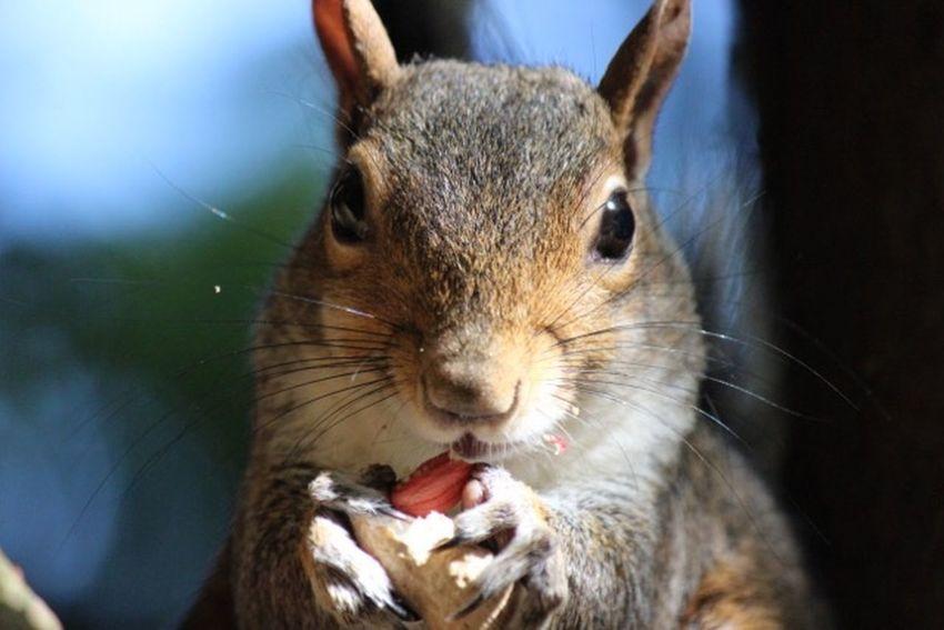 Animal Themes Animal Mammal Animal Wildlife One Animal Rodent Close-up Squirrel