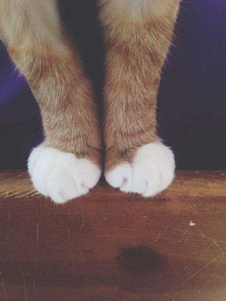 Low Section One Animal Pets Animal Leg Domestic Cat Paw Domestic Animals Indoors  Animal Themes Mammal Feline Close-up One Person Day People