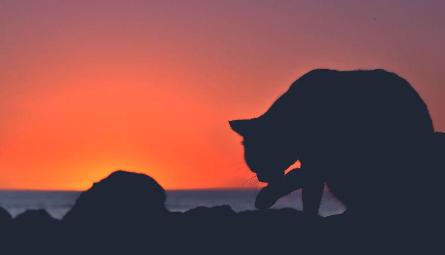 Silhouette of cat at rocky coastline against orange sky