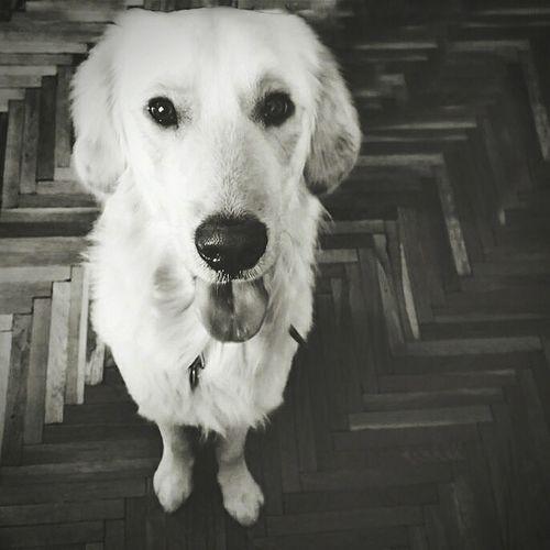 Dog Dog❤ Animals Pedro Enjoying Life Animal Photography Playing With The Animals Dog Days
