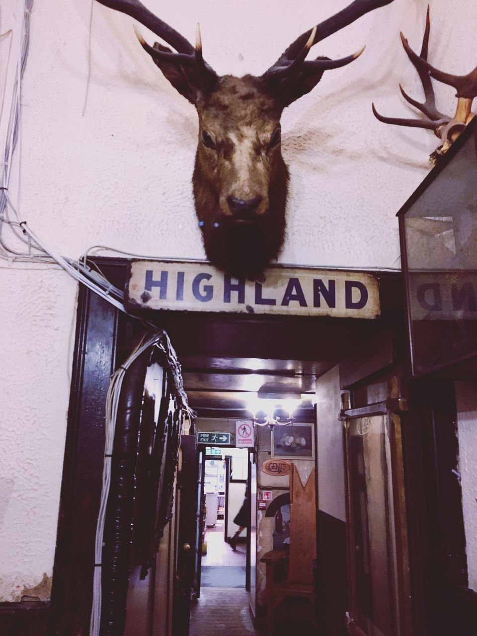 text, communication, one animal, animal themes, hanging, mammal, no people, taxidermy, architecture, built structure, day, indoors, stag, domestic animals