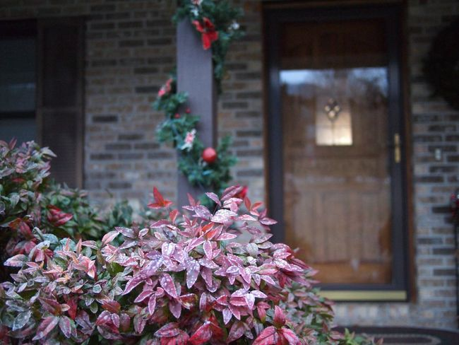Front Porch Christmastime Christmas Decoration Flower Flowering Plant Plant Beauty In Nature Architecture Built Structure Freshness