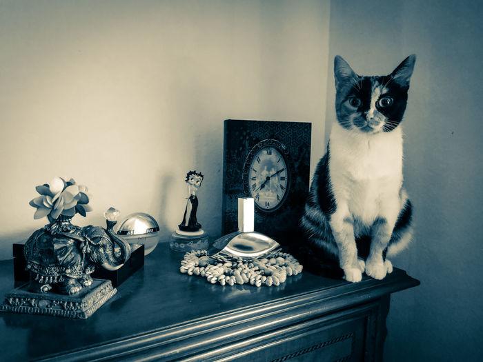Retro cat 😸