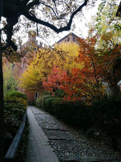 Architecture Castle Multi Colored Tree Color Of The Autumn