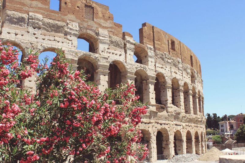Italy Rome Flowers Colosseum