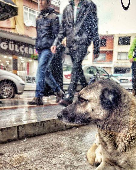 Yağmurlu Körfez günü. Rainy Rain Dog Street Moment O_an LG  G4 Mobilephotography VSCO Vscocam Vscolovers Nature Instagood Instalike Instadaily Instanimal People