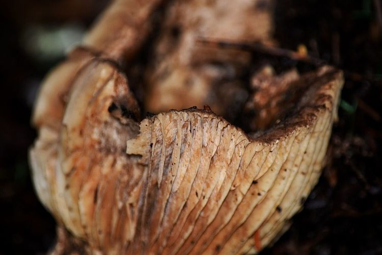 Close-up Food Food And Drink No People Brown Textured  Nature Freshness Healthy Eating Outdoors Day Forestwalk Beauty In Decay Nature Photography Nature_collection Beautiful Nature Forest Photography Mushroom_pictures Fungi Outside Photography Moss Beauty In Nature Plant Nature Fragility