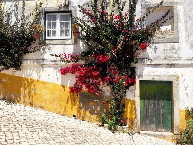 Óbidos  Portugal Rose - Flower Roses Façade Door Doors Window Windows Flowers White Color Pavement Growth Growing EyeEm Best Shots EyeEm Masterclass White Facade White Village