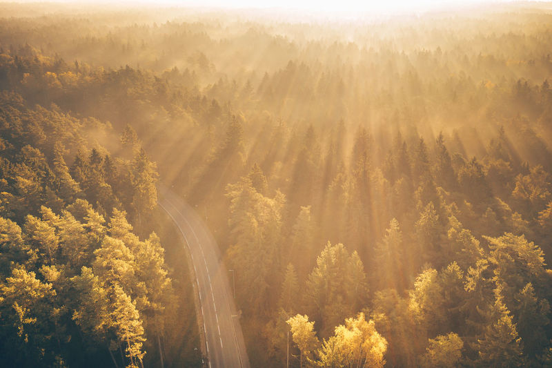 Foggy morning Drone  Aerial View DJI X Eyeem Mavic 2 Mavic 2 Pro Aerial Lietuva Europe Kulautuva Kaunas County Beauty In Nature Scenics - Nature Tranquil Scene Tranquility Plant Tree Nature No People Environment Idyllic Day High Angle View Non-urban Scene Fog Forest Land Outdoors Sunlight Growth WoodLand